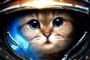 SpaceCats in Space handlar om rymdkatter i rymden